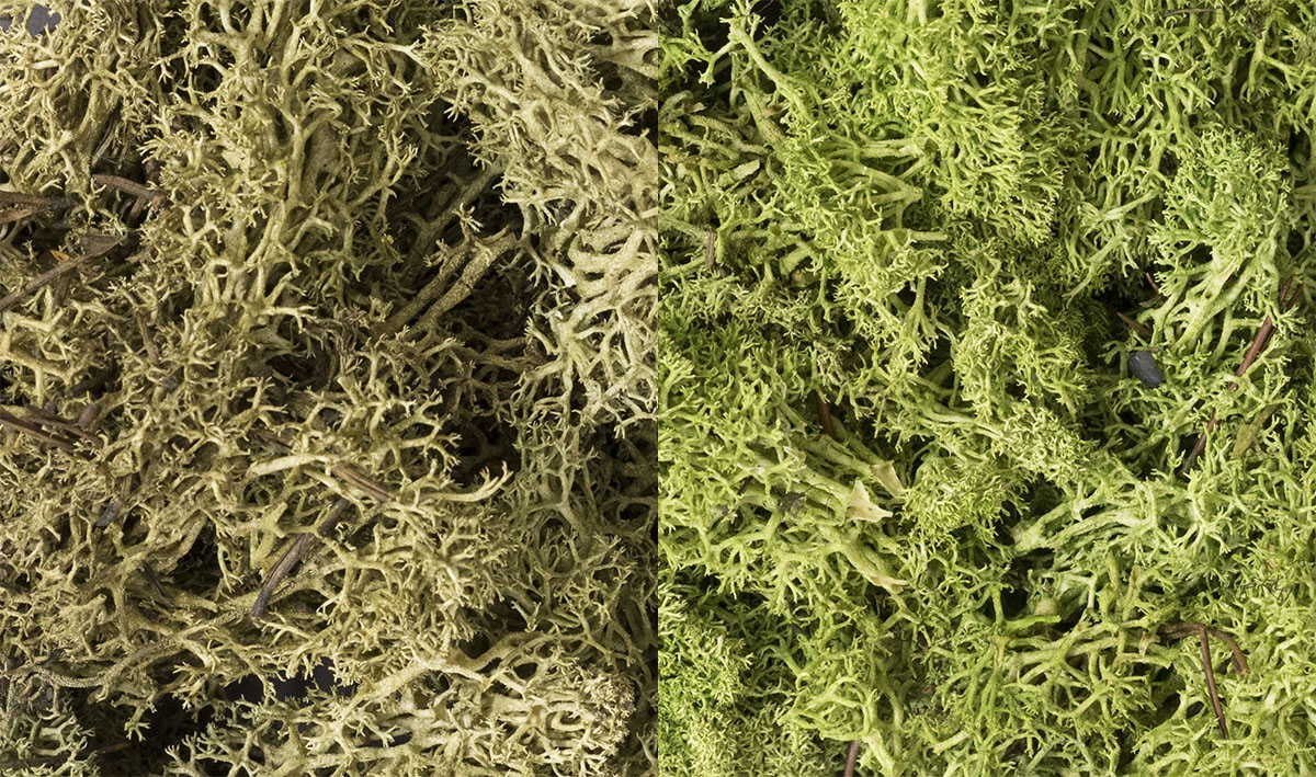 Lichen - Light Green Mix